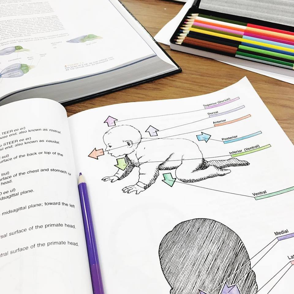 Neuroscience Coloring Book